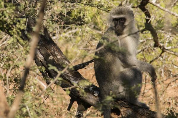 Cute monkey!!